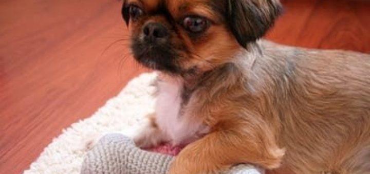 Амигуруми. Косточка крючком - игрушка для собачки