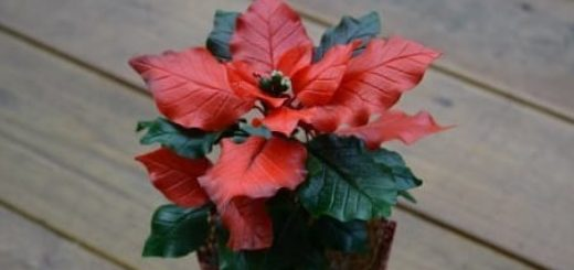 Рождественская звезда ПУАНСЕТТИЯ из холодного фарфора