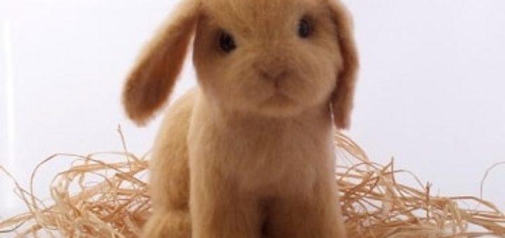 Сухое валяние. Вислоухий крольчонок
