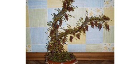 Виноградное дерево из бисера. Мастер-класс