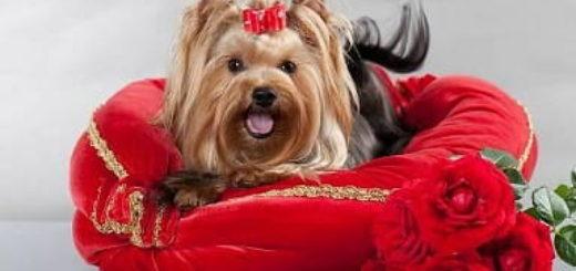 Шьем кроватки для домашних животных