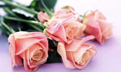 Нежные розы своими руками