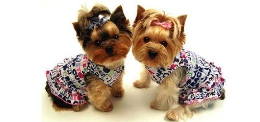 Товары для маленьких собак