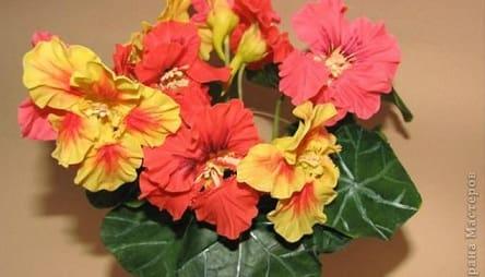 Лепка цветов из холодного фарфора. НАСТУРЦИЯ