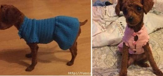 Вяжем крючком одежку для собачки