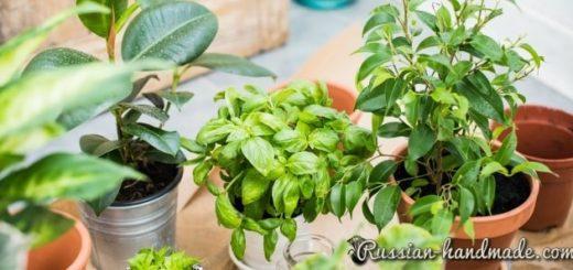 Горшечные растения, которые очищают воздух от опасных загрязняющих веществ