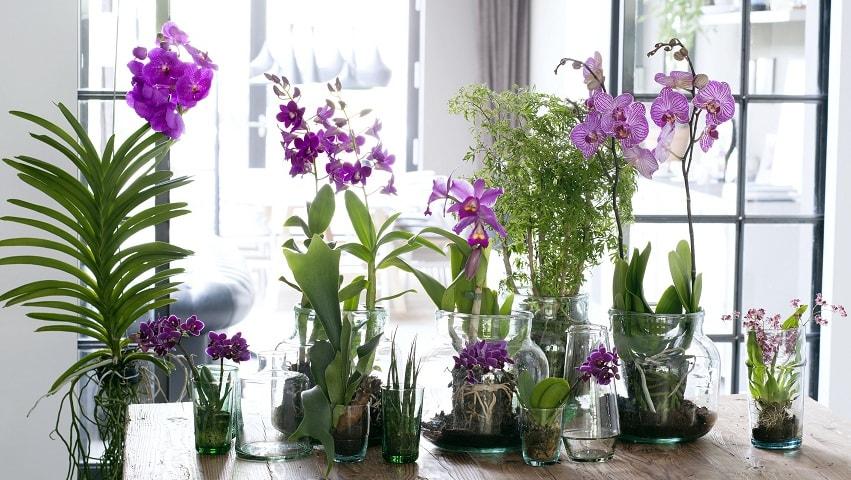 Мучнистый червец - как спасти орхидеи (3)