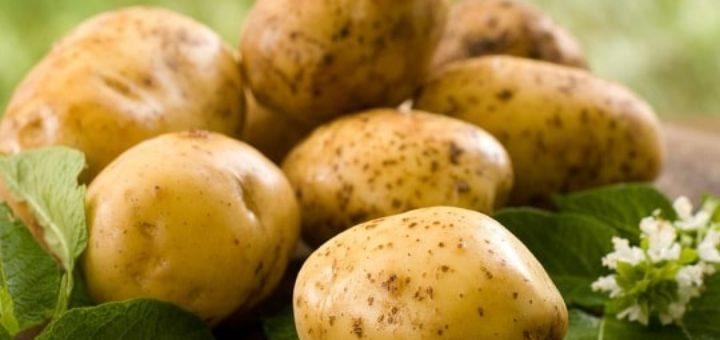 Секрет использования цветков картофеля (1)