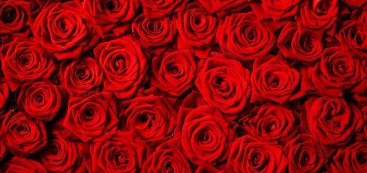 Цветочная бесконечность в виде 1001 розы (2)