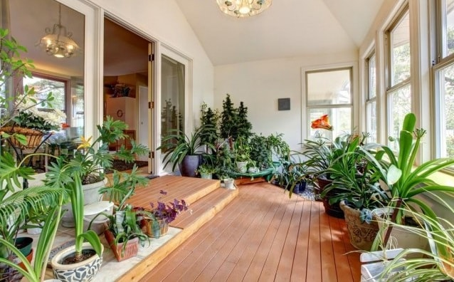 Комнатные растения в интерьере (3)