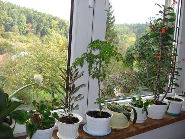 Комнатные растения в интерьере (4)