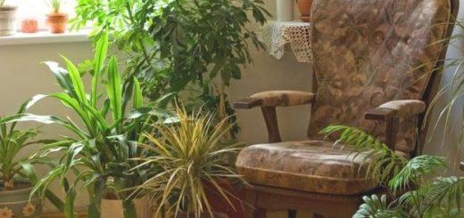 Комнатные растения в интерьере (5)