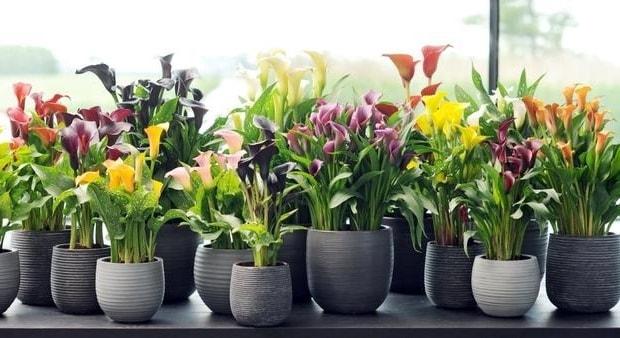 Комнатные растения в интерьере (6)