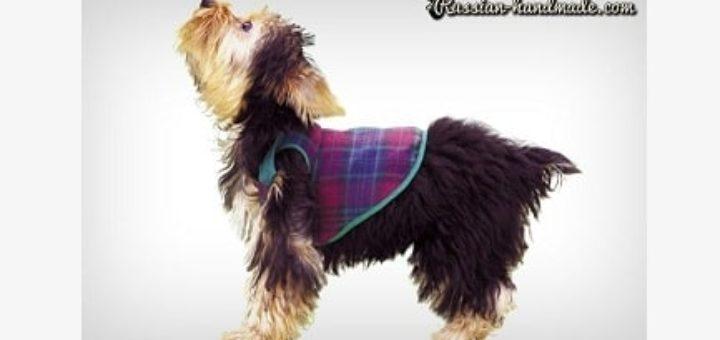 Шьем одежку для собачки. Выкройка (2)